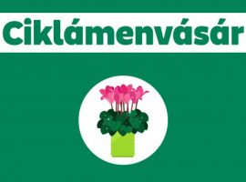 Virágokkal a  fákért akció a II. kerületben