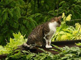 25 métert zuhanva kútba esett egy macska –  túlélte